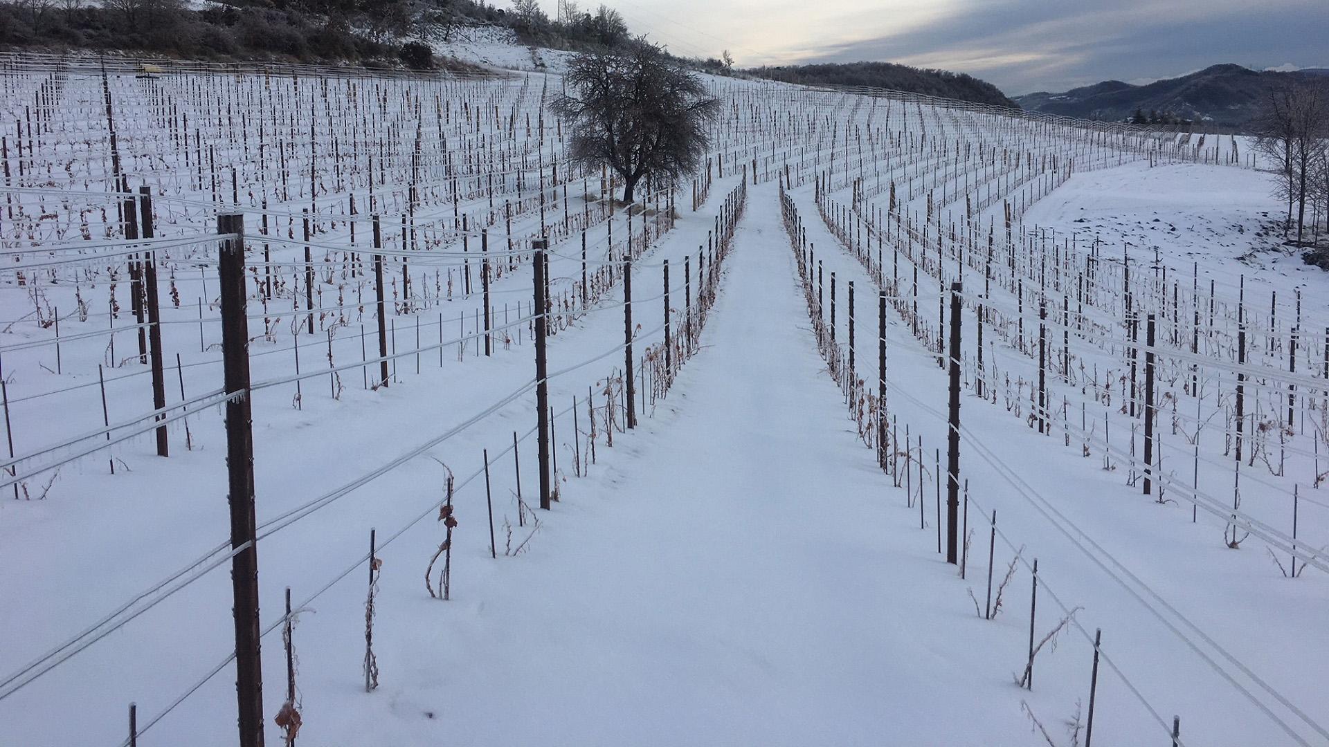 Azienda Agricola RoccaVinealis | Roccavignale, Provincia di Savona | Coltivazione di Granaccia | Vino Rosso della Liguria | Privacy Policy Cookie