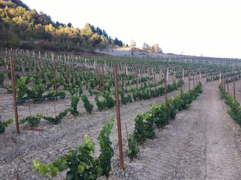 Azienda Agricola RoccaVinealis | Roccavignale, Provincia di Savona | Coltivazione di Granaccia | Vino Rosso della Liguria